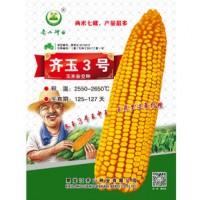 供应齐玉3号玉米种子