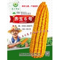 供应齐玉6号玉米种子