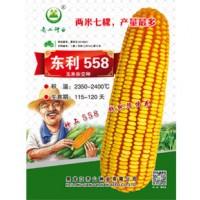 供应东利558玉米种子
