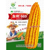 供应东利669玉米种子
