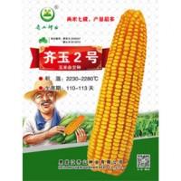 供应齐玉2号玉米种子