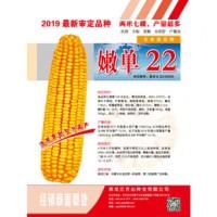 供应嫩单22玉米种子