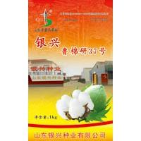 供应鲁棉研37(鲁253)棉花种子