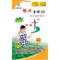 供应晋棉38(DR409)棉花种子