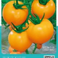 供应黄果金泽美番茄种子