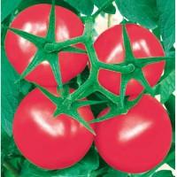 供应盛博粉果番茄种子